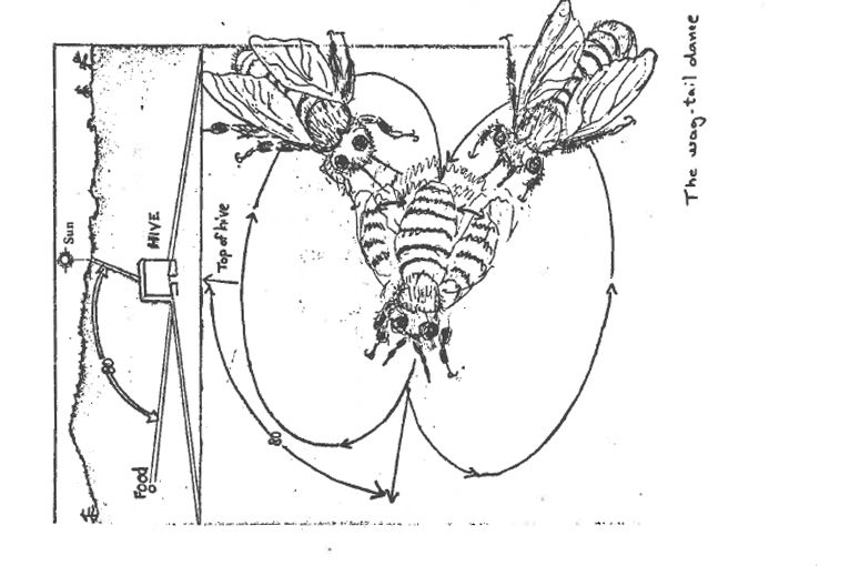 The Application of Karl Von Frisch's Findings on Bee Language for the Location of Nectar Sources on the University School Campus